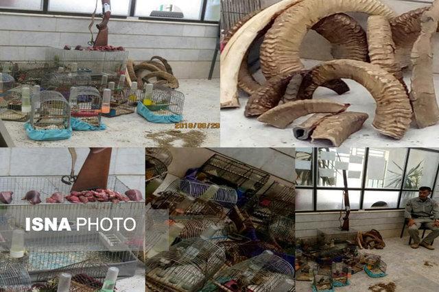 جریمه 55 میلیون تومانی شکارچی متخلف