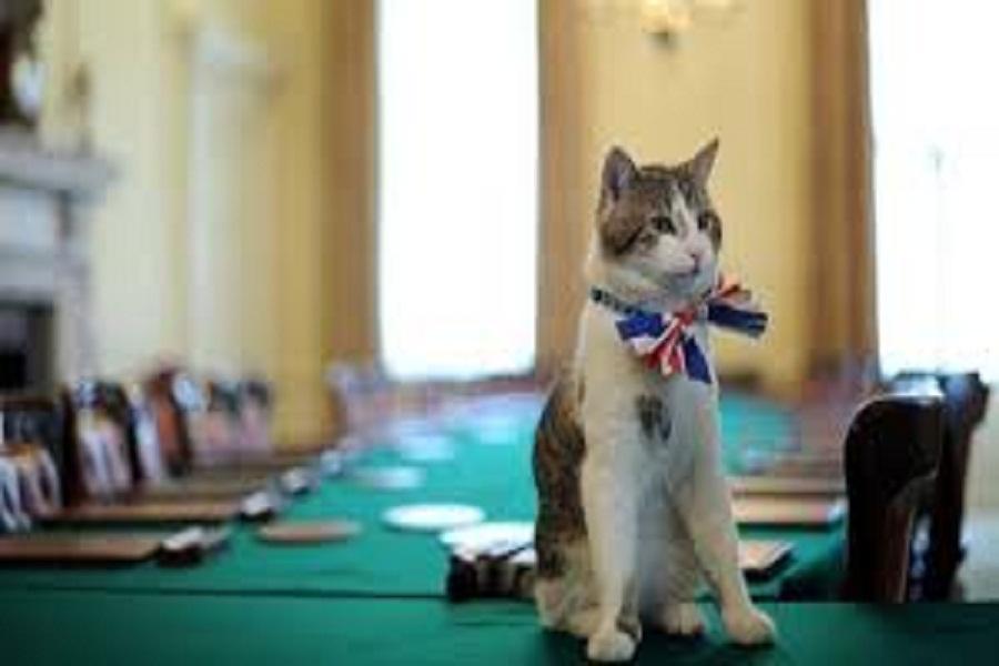 وزیر فرانسوی نام گربه اش را برگزیت گذاشت