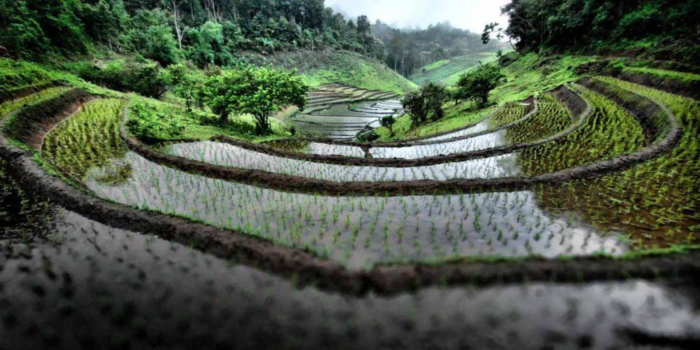 برنامه ریزی برای تعطیلات در تایلند