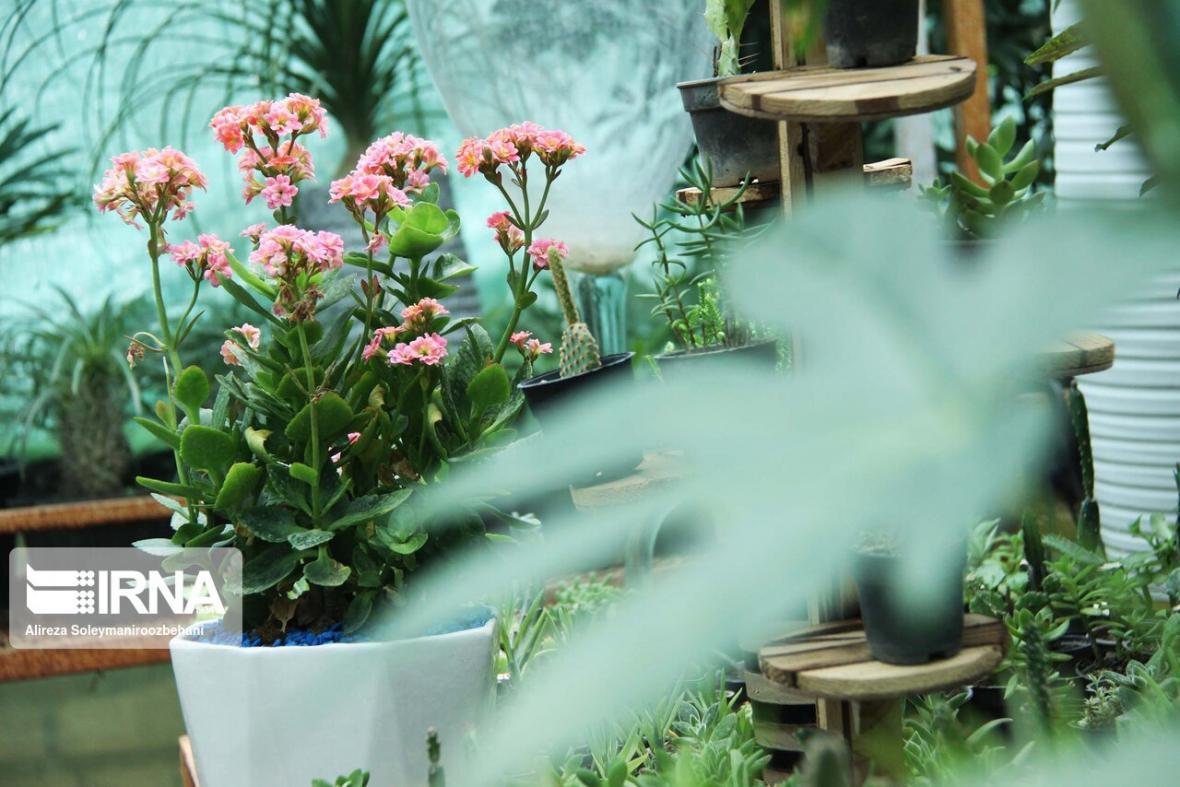 خبرنگاران کدام گیاهان دور کننده های طبیعی حشرات هستند؟