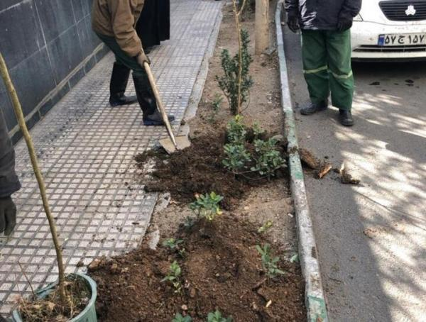کاشت 300 نهال مثمر و غیر مثمر در منطقه 3 به مناسبت هفته هوای پاک