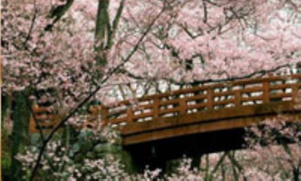 تأثیر بهار بر روحیه و رفتار!