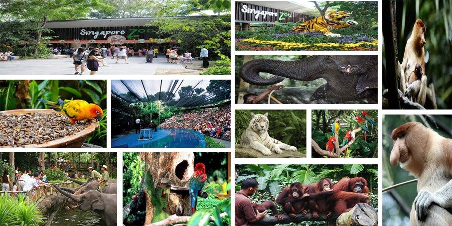آشنایی با باغ وحش سنگاپور
